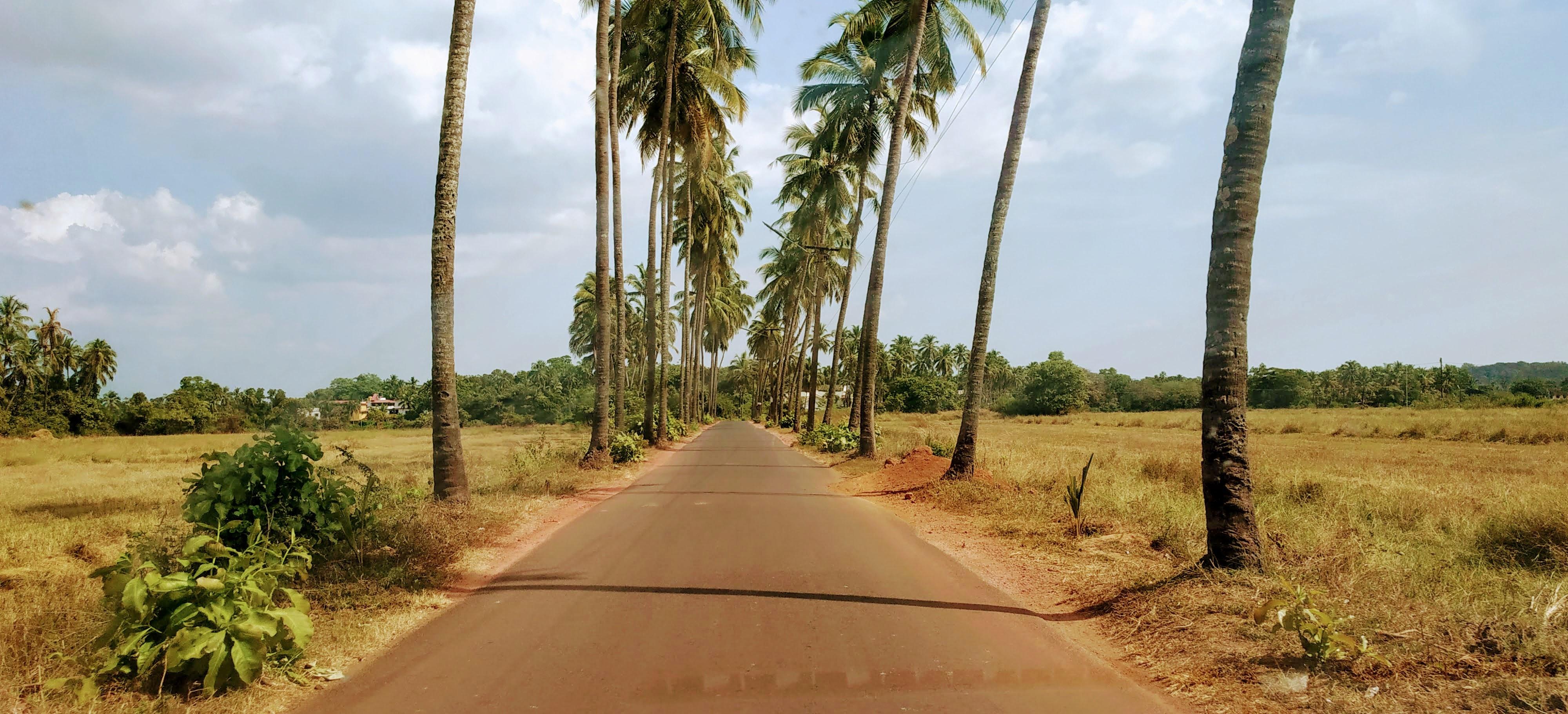 Goa_Trees.jpg